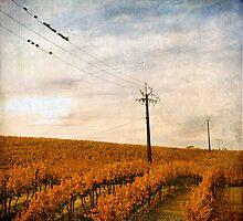 Birds on a Wire by Gerijuliaj