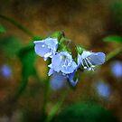 Blue Flowers on Dark Background by William Martin