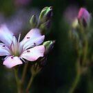Pink Flower Buds by William Martin