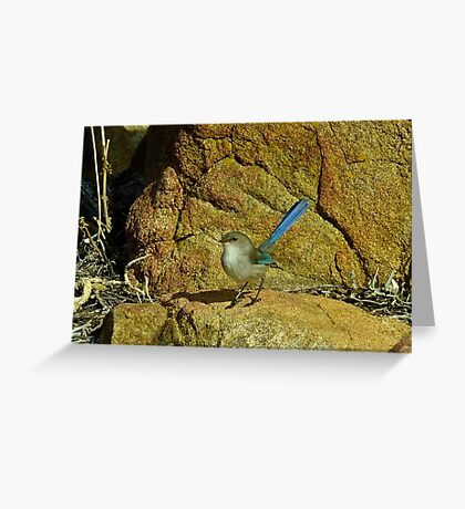 Another Blue Fairy Wren - Sugar Loaf Rock, Western Australia Greeting Card