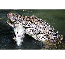 Gator with his Cat Fish Photographic Print