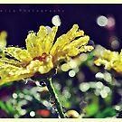 Sunshine Droplets by lisabella