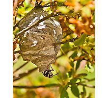 HORNET AND NEST Photographic Print