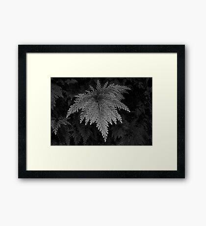 Leaf after rain, Dominica, Caribbean. Framed Print
