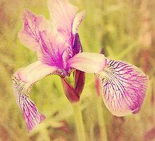 Vintage Iris In Pink by Rewards4life