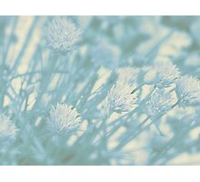 Blue Pastel Alliums Photographic Print