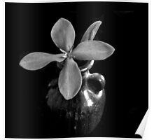 Monotone Macro Floral Arragement Poster