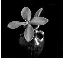 Monotone Macro Floral Arragement Photographic Print