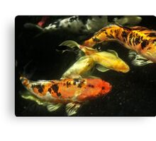 Koi Community Canvas Print
