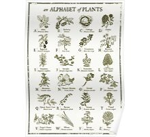 alphabetter - plants Poster