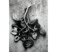 Everblooming Photographic Print