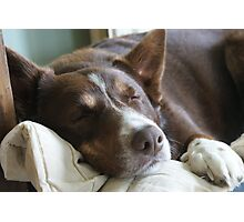 Snoozing hound Photographic Print