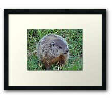 A Surprise Encounter Framed Print