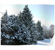 Snow On The Trees Poster