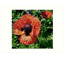 Orange Flower Power Art Print