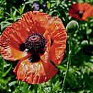 Orange Flower Power by Jason Dymock Photography