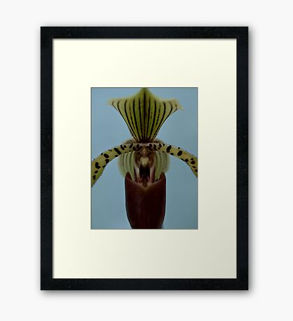 Proud Orchid Framed Print