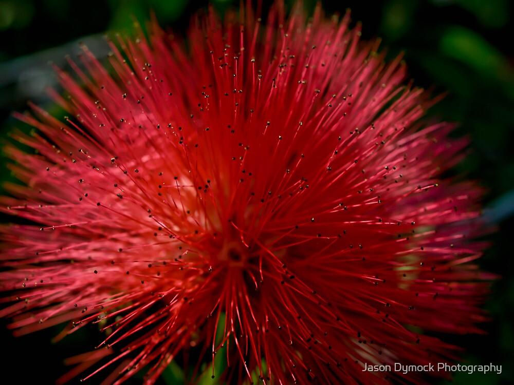 Red Pom Pom by Jason Dymock Photography