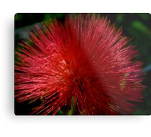Red Pom Pom Metal Print