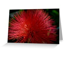 Red Pom Pom Greeting Card
