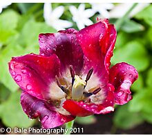 Rain touched flower Photographic Print