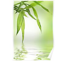 Bamboo with water reflection  Poster