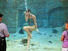 Mermaid Kisses, Seaworld FL by Ludwig Wagner