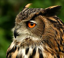 Eagle Owl Profile by Mark Hughes