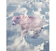 Beary White #redbubble Photographic Print