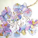 Lacecap Hydrangea 7 by Gea Jones