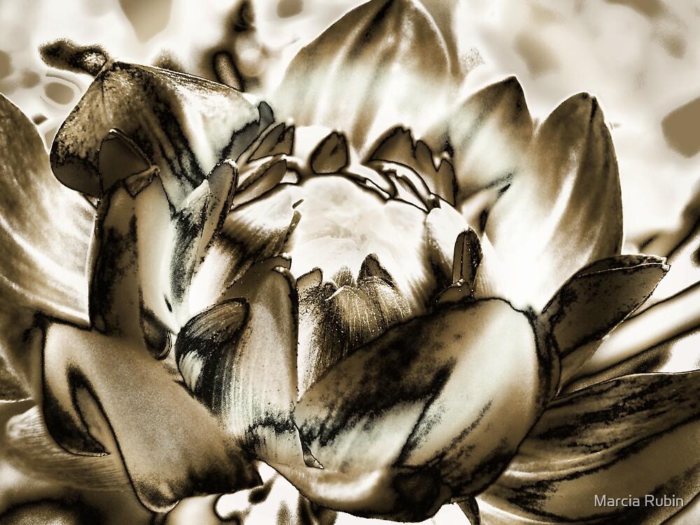 Birth of a Flower  by Marcia Rubin