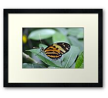 Orange, Yellow and Black Butterfly Framed Print