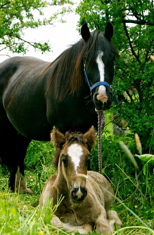 Mare and Foal by Lou Wilson