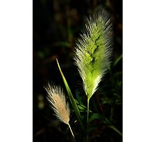 Wild Grasses of Spring Photographic Print