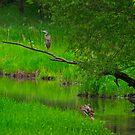 Heron dreamscape by Daniel  Parent