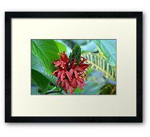 Red Tropical Flower  Framed Print