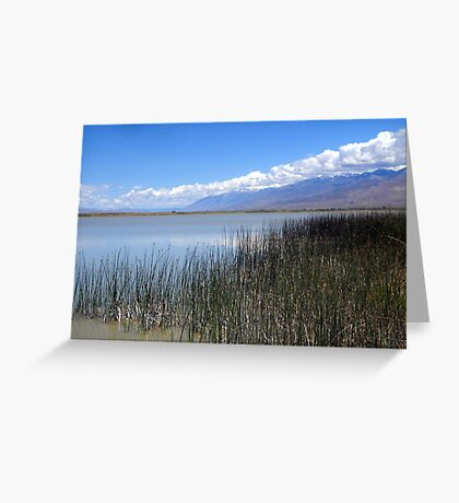Cool Breezes Greeting Card