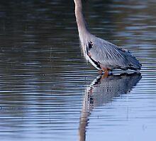 Heron Reflection by Randall Ingalls