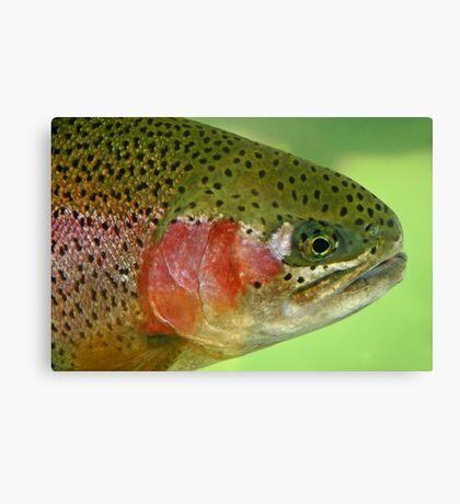 Oregon Rainbow Trout Canvas Print