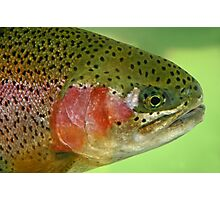 Oregon Rainbow Trout Photographic Print