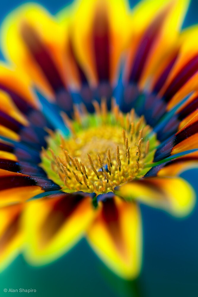 Everyone smiles as you drift past the flowers,-that grow so incredibly high by alan shapiro