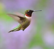 Hummingbird in Lilacs by Mully410