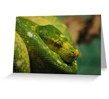 Sleeping Snake Greeting Card