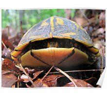 Turtle Sneaks a Peek Poster