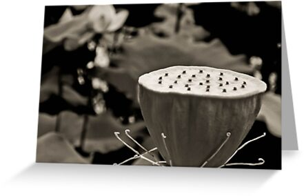 Black and White Lotus Seed Pod by Jason Dymock Photography