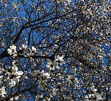 Magnolia Daze by MarianBendeth