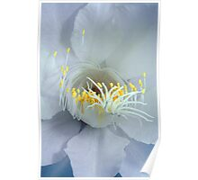 """One Night Only"" - Night Blooming Cereus 4 Poster"