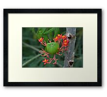 Little Flowers with Green Pod Framed Print