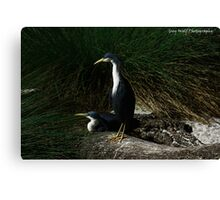 'Birds of a Feather' - South Perth WA Canvas Print