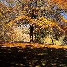 """Autumn Canopy"" by Heather Thorning"
